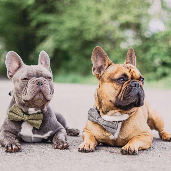 Fliege für Hunde grau khaki