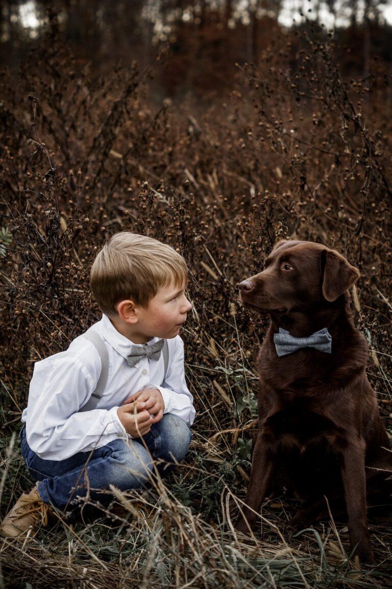 Hundefliege blau mit Labrador