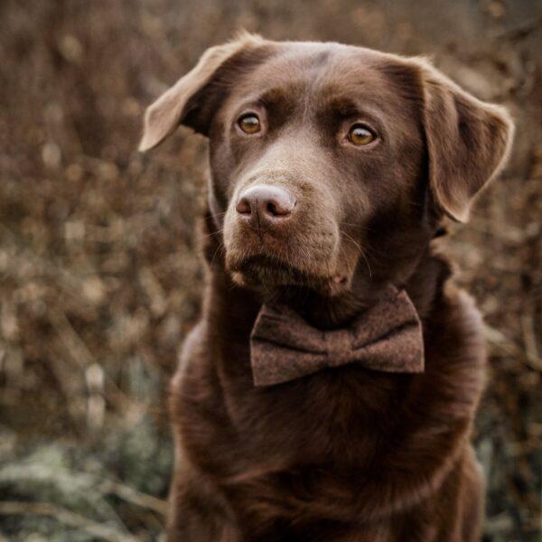 Hundefliege in braun