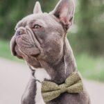 Hundefliege khaki